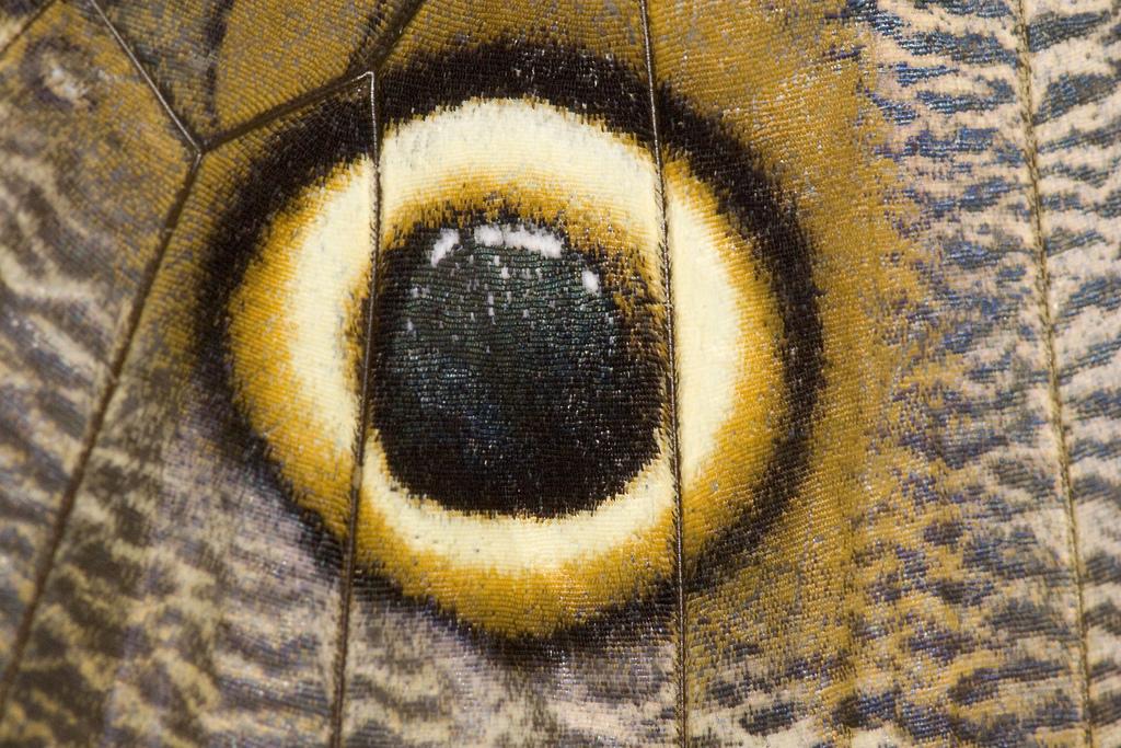 It looks like an eye, but it's a butterfly wing.
